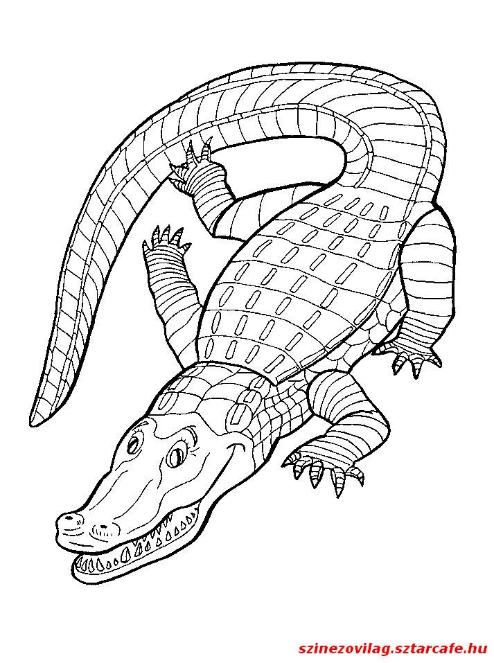 aligator-szinezo-03