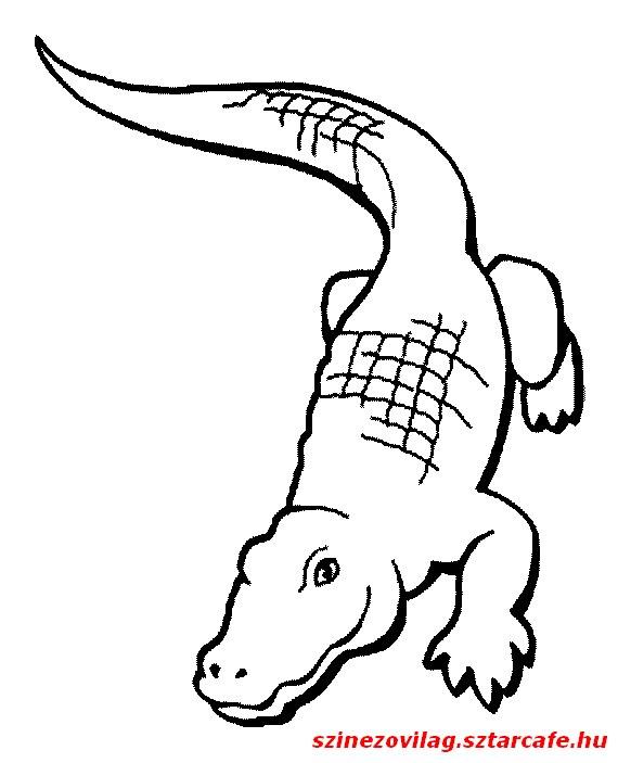 aligator-szinezo-07