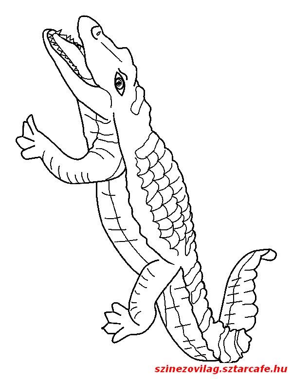 aligator-szinezo-08